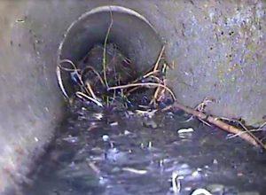 Swindon sewer